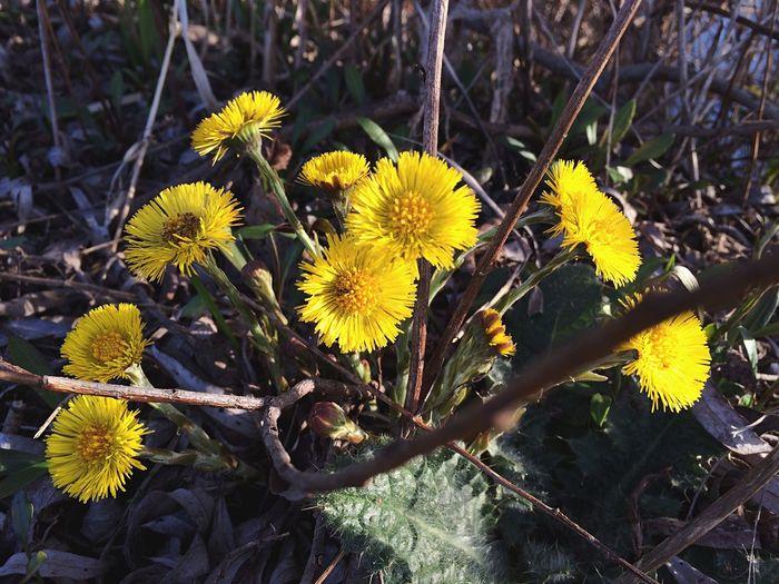 Green Vilkovo Flower Nature