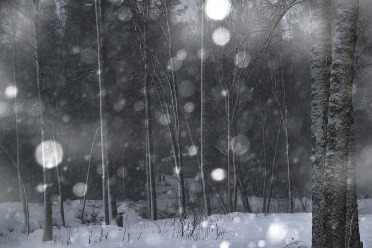EyeEm Best Shots Beauty In Nature Cold Temperature Forest Frozen Illuminated Landscape Nature Night No People Outdoors Scenics Snow Snowflake Snowing Tree Weather Window Winter