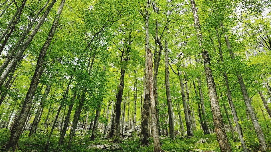 Mountain Risnjak EyeEm Selects Tree Backgrounds Full Frame Grass Close-up Green Color Photosynthesis Delicate Colored Relaxing Moments Daytime Scenery Beautiful Greenery Green Leaves Growing Woods Relaxed Moments Inflorescence
