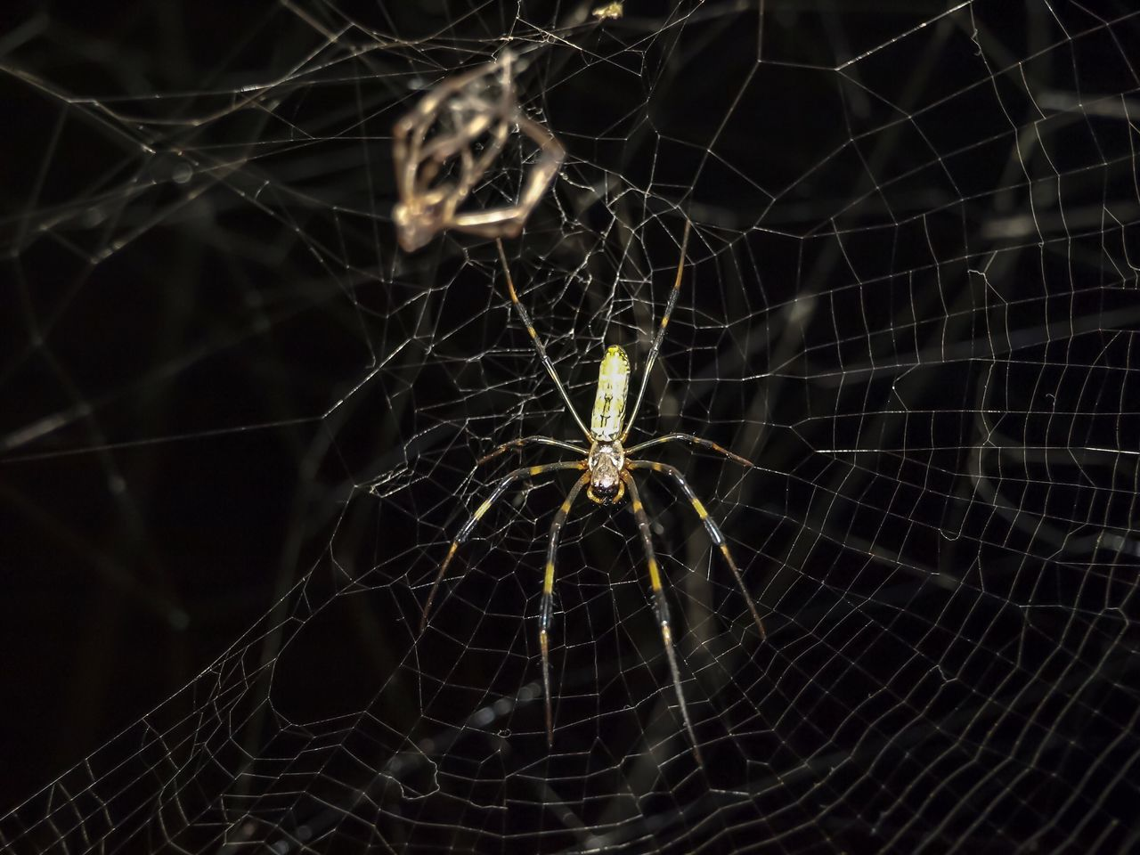 spider web, spider, one animal, animal themes, web, animals in the wild, survival, close-up, animal wildlife, insect, no people, focus on foreground, outdoors, complexity, nature, animal leg, fragility, day, black background