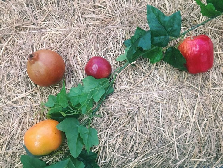 Hay Food And Drink High Angle View Food Leaf Day Nature Festive Holiday Freshness Fruit Green Christmas Decoration Christmastime Christmas Decorations Christmas Ornament Outdoors Close-up Fruits Tropical Botanic Ornament Copy Space Copyspace Easter