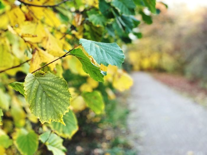 Close-Up Of Yellow Leaves On Road