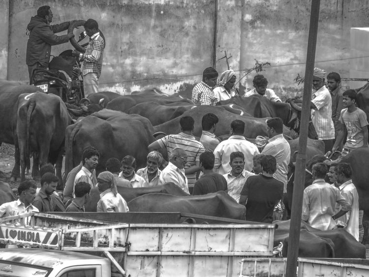 Collected Community Bull Market Farmers Business People buying exchanging buffaloes and bulls