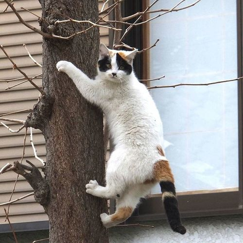 猫 Cat 猫の日 222