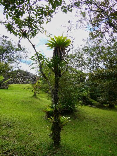 Orchid, el arenal Lumix Costa Rica Volcano Flower Orchid Lush Foliage Tree Branch Field Sky Grass Green Color Plant Life Blossom Botany Growing Lush - Description Greenery Calm In Bloom Flower Head Focus Green Countryside Blooming Stem