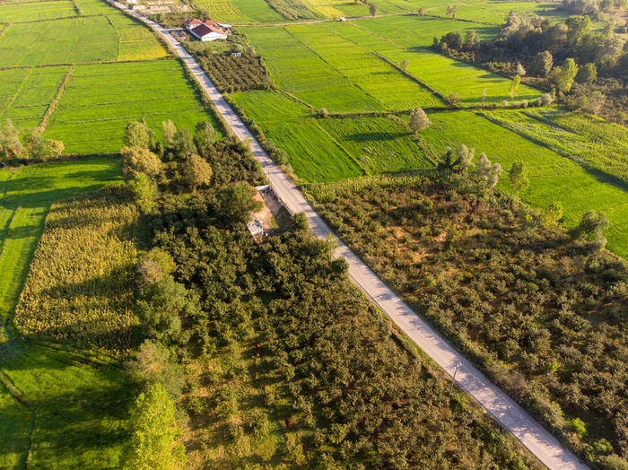 High angle view of the green fields and trees and the road. Landscape Agriculture Rural Scene Environment Land Field Growth Farm Scenics - Nature Plant Nature Green Color Tranquil Scene Beauty In Nature Tree Tranquility No People Outdoors Plantation Day Aerial View Crop