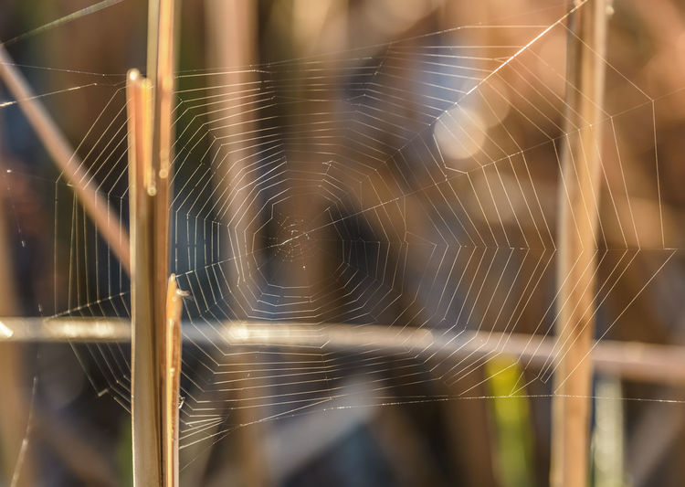 Animal Themes Close-up Day Fragility Nature No People Outdoors Spider Spider Web