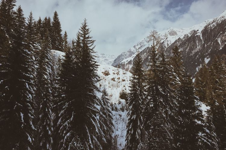 What a view Landscape_captures Wanderlust Exploretocreate Naturelovers Traveltheworld Neverstopexploring  Snow Snowymountain Winter Cold Temperature Nature Mountain Beauty In Nature Tree Snowcapped Mountain Landscape Wilderness No People Outdoors Forest