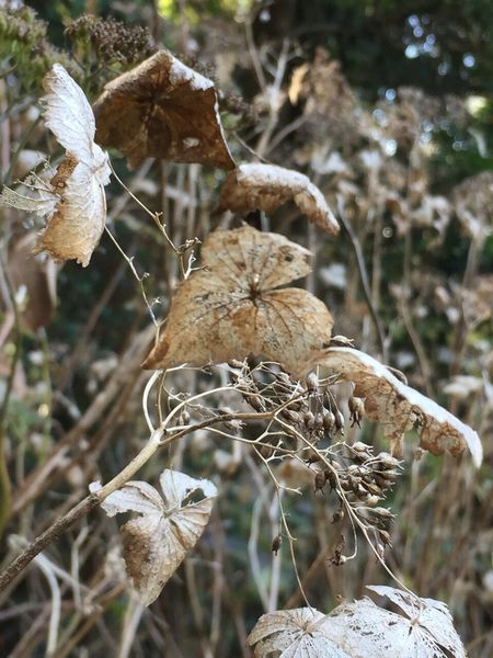 Plant Close-up No People Growth Day Fragility Nature Tree Beauty In Nature Winter Outdoors Cold Temperature Dried Plant