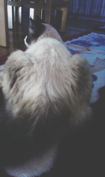 Mimao. Cat Love Paraná Cute TBT  Eyedayb