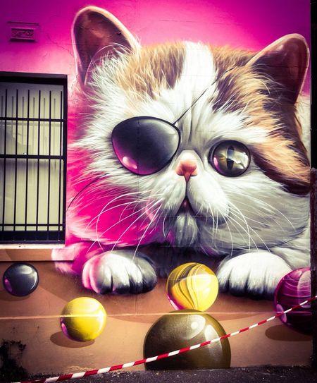 Melbourne Graffiti pussycat by Smug visiting ...