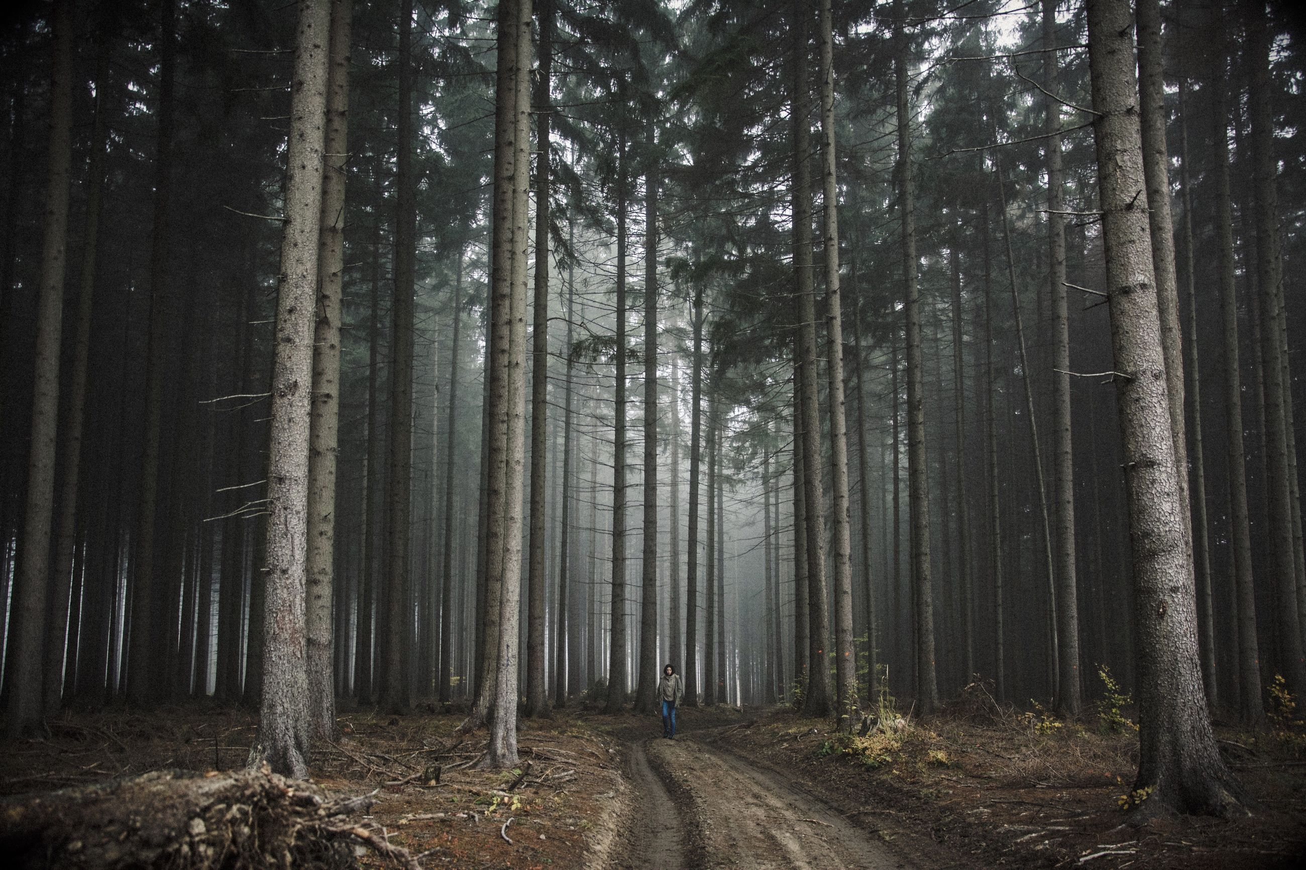 forest, tree trunk, woodland, tranquility, tree, tranquil scene, dirt road, non-urban scene, beauty in nature, scenics, nature, landscape, tall - high, growth, outdoors, abundance, the way forward, remote, diminishing perspective, empty road, tree area, tall