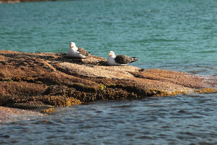 Seagulls perching on swimming in sea