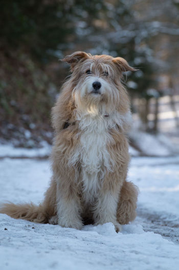 Winter Animal Themes Cold Cold Temperature Day Dog Domestic Animals Focus On Foreground Forest Mammal Nature No People One Animal Outdoors Pet Pets Snow Winter Wood - Material