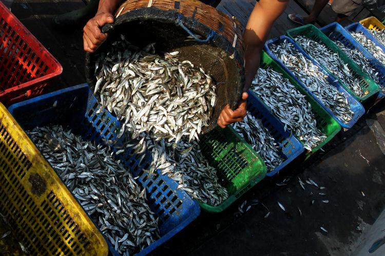 Fisherman Pouring Fish In Basket At Market