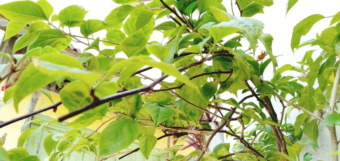 Low angle view of green tree