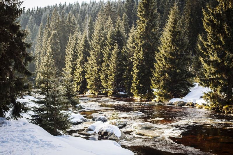 Wintertime River River View Riverbank River In The Mountains River Collection River Isis Spruce Trees Spruce Mountain Snow Snowcapped Mountain Sunbeams Light Winter Wonderland Sunny Winter Snow Nature Cold Temperature Beauty In Nature Tree No People Tranquility Tranquil Scene Scenics Mountain Sky Landscape Water Shades Of Winter