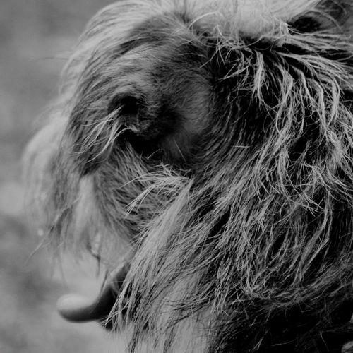 Shades Of Grey Taking Photos Dog Dog Love Dogs Dogoftheday Black&white Nikonphotography Nikon Iggermany