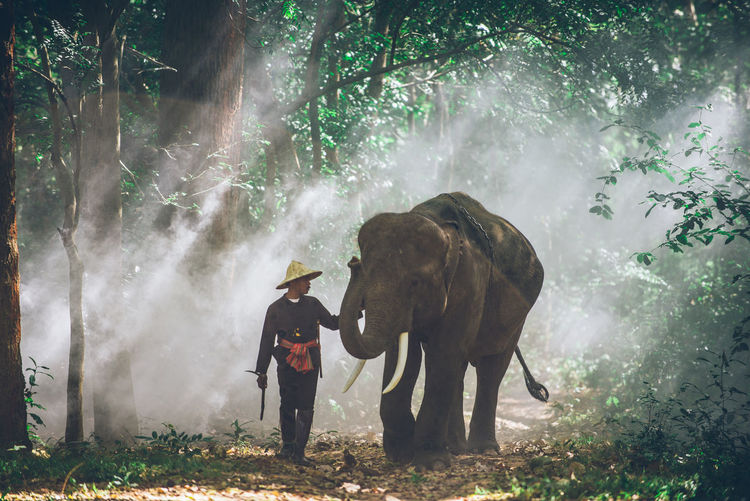 Man with elephant walking in forest