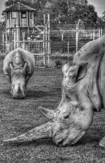 Rhino Animals Rhino Eye Em Scotland Cute