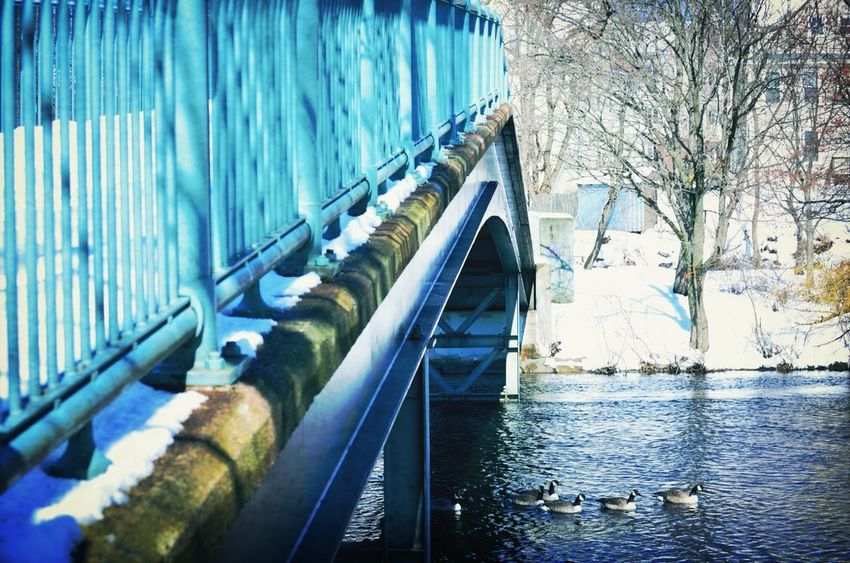 Nature Bridge Water_collection Nature_collection