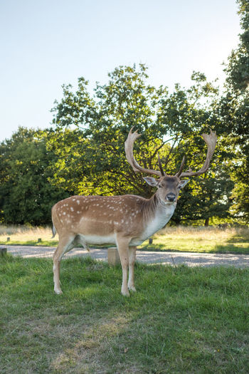 A curious deer - Richmond Park, London 2018 Deer Nature Presence Richmond Park, London Animal Animal Portrait Animal Themes Animal Wildlife Animals Animals In The Wild Antler Approaching Bambi Curiosity Curious Deer England Herbivorous Inquisitive Look Nature Outdoors Plant Stag Wildlife
