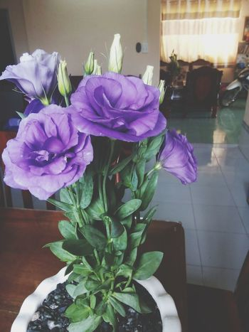 Do you like this flower ?