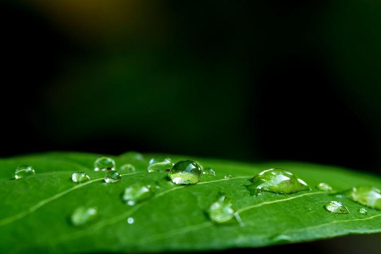 Drop Wet Leaf