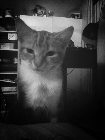 My Cat♥