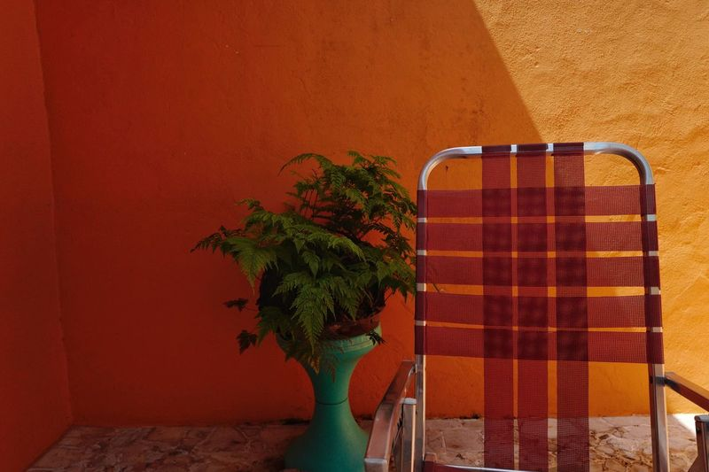 Close-up of potted plants in front of wall