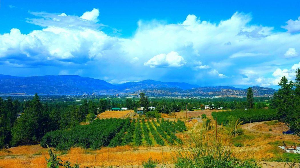 Blue Sky True Beauty Bright Sky Nature Landscape City View  Clouds And Sky Green Vineyard Kelowna Vineyards  Summer ☀ Storm Cloud
