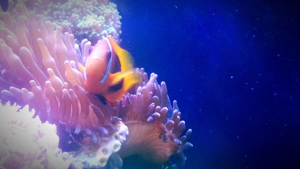 Marine Aquarium Fish Coral Live Rock