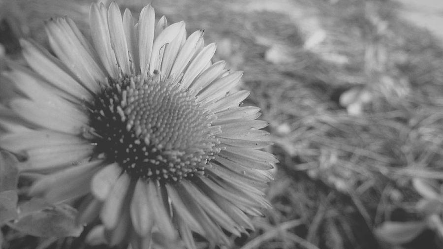 Close Up Nature