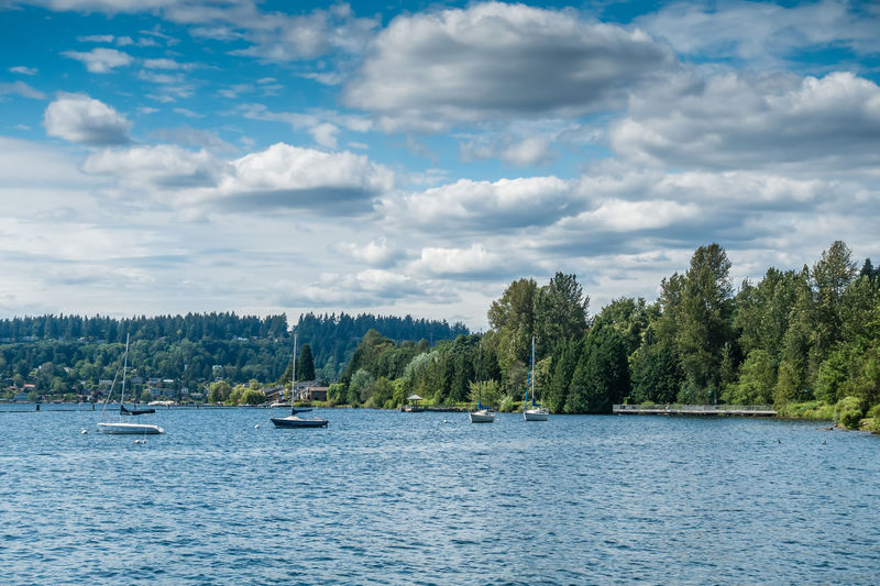 Boats are anchored on Lake Washington. Beauty In Nature Boats Cloud - Sky Day Lake Mode Of Transportation Nature Nautical Vessel No People Non-urban Scene Outdoors Plant Sailboat Sailing Saliboats Scenics - Nature Sky Tranquil Scene Tranquility Transportation Tree Water Waterfront Yacht