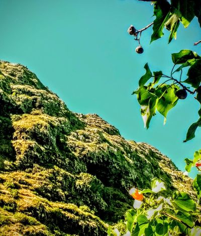 So Close And Yet So Far Low Angle View Beauty In Nature Outdoors Eye Em Nature Lover Green Growth Freshness Blue Sky Corner Of Mountains Waimanalo Hawaii