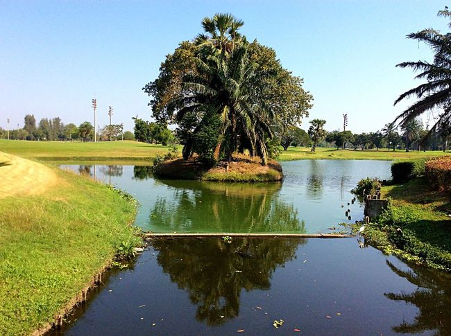 Golf Is My Life ⛳️ Water Reflections We ❤️ Thailand Tree Water Nature Sky Clear Sky Reflection Travel Destinations Green Color Beauty In Nature Outdoors Palm Tree Growth Scenics Grass Tranquil Scene Day No People Architecture