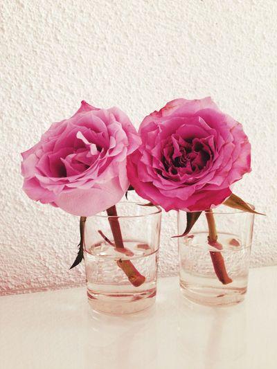 Dark Pink By Motorola Rosé Rose🌹 Pink Rose Romantic I Love Flowers