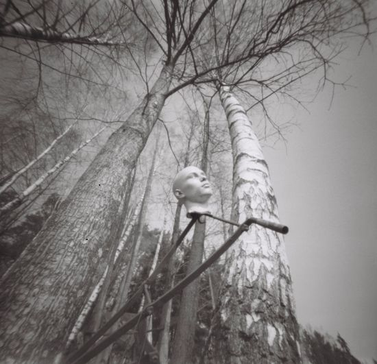 Mopinhole Pinhole Film Photography Blackandwhite Bw_collection Filmphotography Forest Film Tree Bird Animal Themes Animals In The Wild Animal Vertebrate Bare Tree Branch Low Angle View Perching Animal Wildlife Plant One Animal Nature No People Day Outdoors Sky Tree Trunk Architecture
