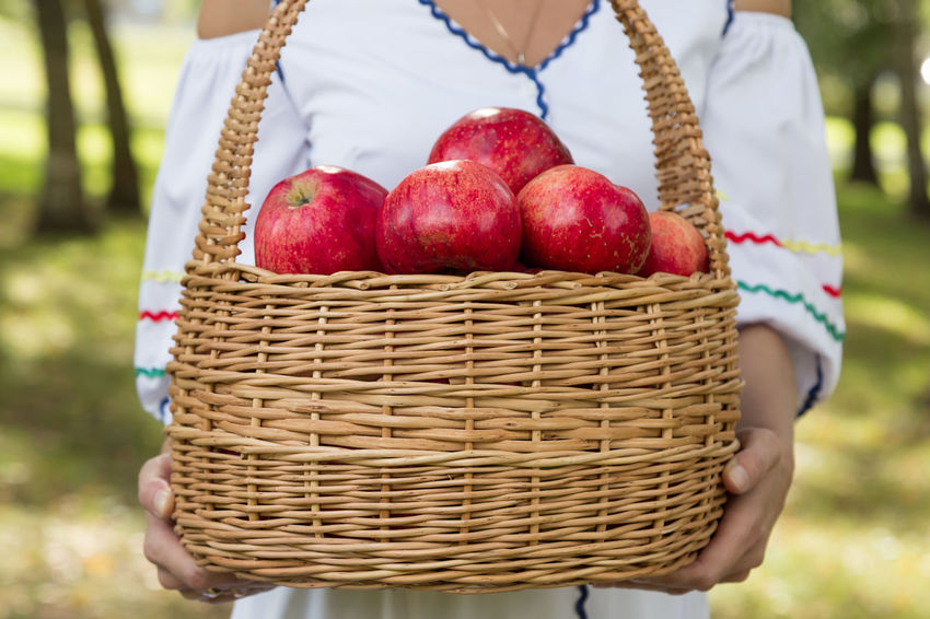 woman carry a harvest of red apples in a wicker basket Agriculture Apple Diet Eco Family Farm Gardener Rustic Vegetarian Apples Basket Food Fresh Garden Girl Harvest Healthy Eating Healthy Food Organic Picking Red Apple Ripe Straw Vegan Crop  Homegrown Produce Cultivated Harvesting Farmer's Market Organic Farm