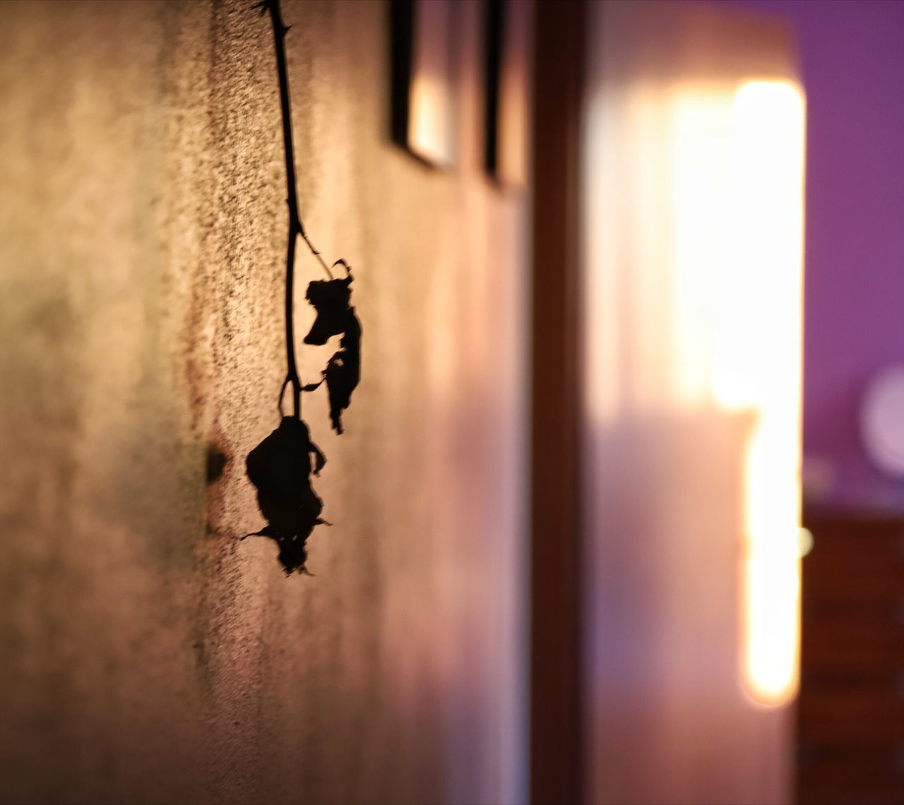 wall - building feature, selective focus, indoors, close-up, no people, hanging, architecture, built structure, focus on foreground, home interior, shadow, nature, entrance, sunlight, door, light - natural phenomenon, creativity, old, metal