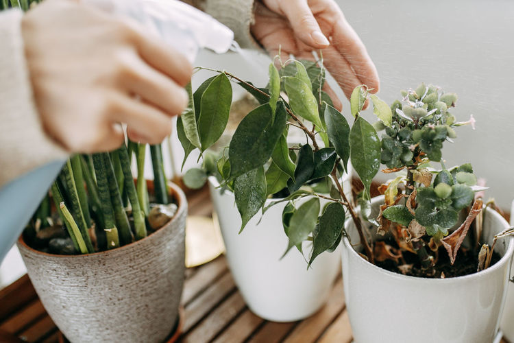 Midsection of person holding potted plant on table