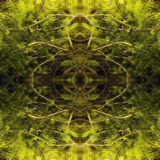 Outdoors Mirror Night Close-up Beauty In Nature Nature Tree Full Frame Backgrounds No People Symmetry Concentric Nature Day Sky Green Color Beatiful Trippy Reflection