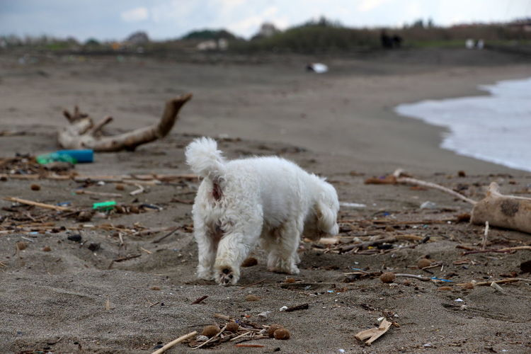 spiaggia coccia di morto Animal Domestic Animals Pets Sand Beach Nature Land One Animal Animal Themes Dog Dogslife No People Melancholy Landscape Melancholy Solitude By The Sea Deserted Beach