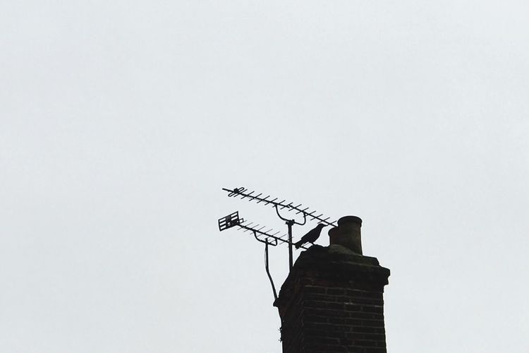 bird, chimney and television antennas in London Signal 4g 5G Roof Bird Copy Space Low Angle View Clear Sky Animal Themes Animals In The Wild No People Outdoors Bird Day Perching Architecture Technology Building Exterior Nature Roof London Tower Architecture Animals In The Wild Sky Architecture Animals In The Wild Animal Animal Wildlife Built Structure