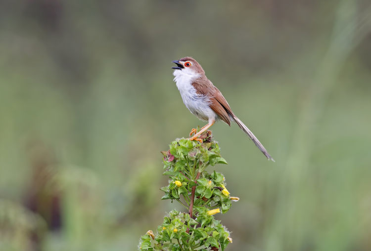 One Animal Animal Themes Animal Animal Wildlife Vertebrate Bird Animals In The Wild Plant Perching Beauty In Nature No People Day Focus On Foreground Growth Nature Close-up Outdoors Selective Focus Green Color Full Length