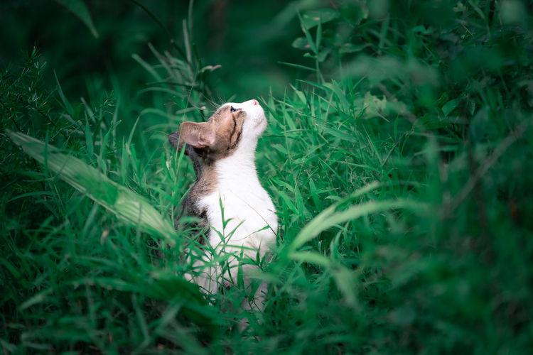 Cat sitting on grass in field