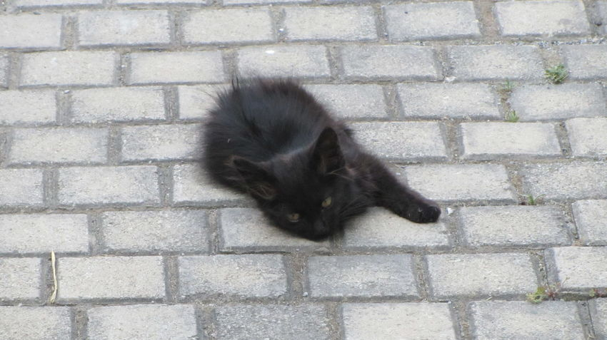 Cyprus Cyprus Cat Nikosia Animal Themes Black Color Day Domestic Animals Domestic Cat Feline Mammal No People One Animal Outdoors Pets Portrait
