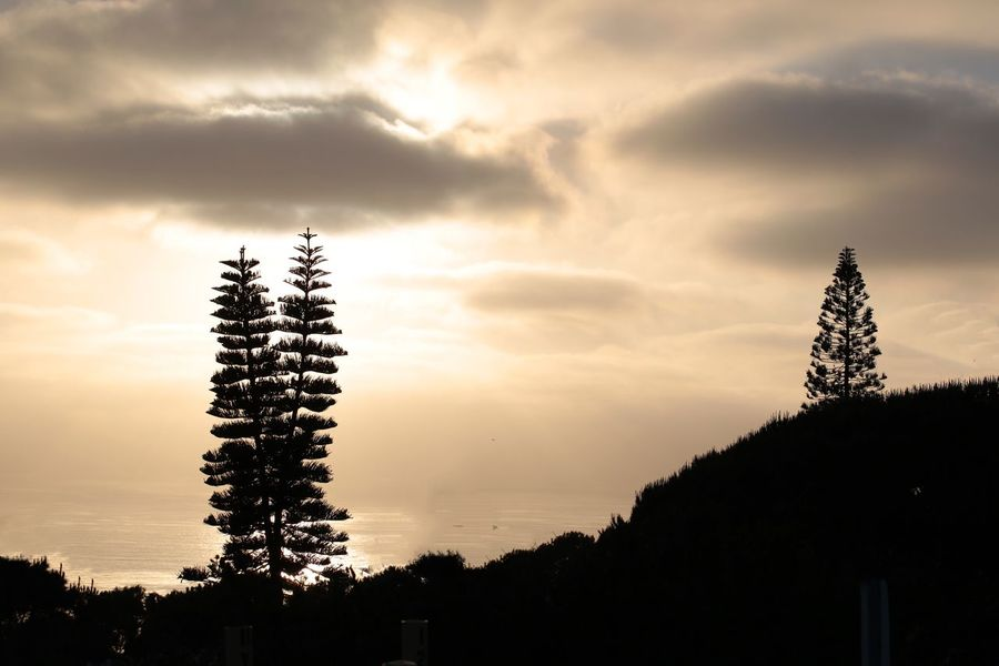 Sunset Sunset_collection Trees Tree JGLowe Tree Sky Silhouette Plant Cloud - Sky Sunset Beauty In Nature Nature Low Angle View No People Growth Outdoors Tranquility Dusk Tranquil Scene