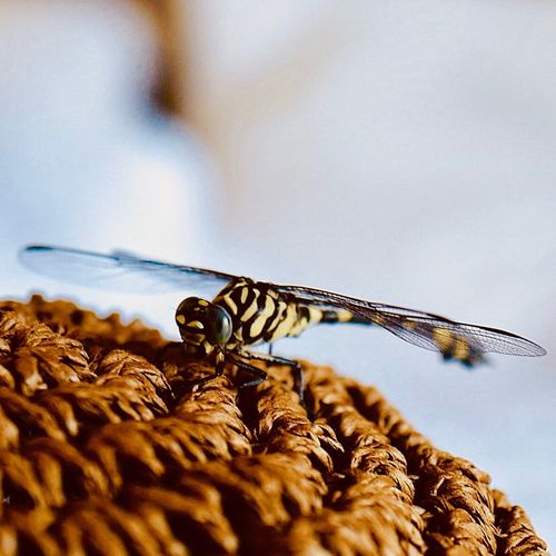 Up close of a dragonfly Invertebrate Insect Animals In The Wild Animal Themes Animal Wildlife Animal Close-up Dragonfly Outdoors Beauty In Nature