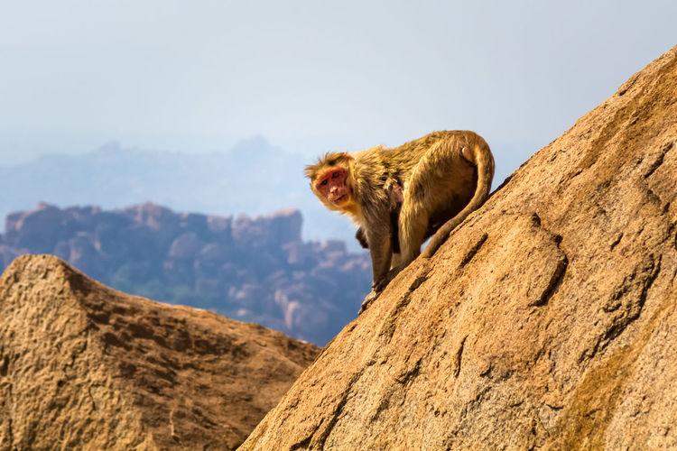 Portrait of monkey on rock against sky